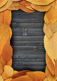 Golden leaves frame on burned planks Royalty Free Stock Photography