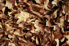 Golden leaves on the ground Stock Images