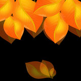Golden leaves Royalty Free Stock Photos