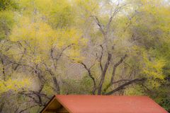The golden leaves of the late autumn forest and the red roof of the forest house stock photos