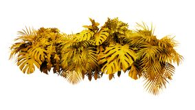 Golden leaves tropical foliage plant bush floral arrangement gold nature new year backdrop isolated on white background, clipping. Path included stock image