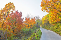 The golden leaves and winding path Stock Photo