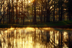 Golden Light. Early morning sunlight shinning through the trees casting a golden glow on the water Stock Images