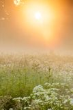 Golden light in foggy meadow Royalty Free Stock Photo