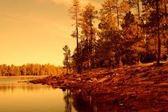 Golden light forest lake Royalty Free Stock Image