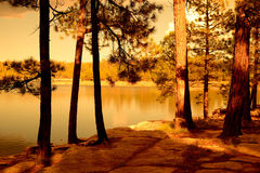 Golden light forest lake Royalty Free Stock Photos