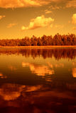 Golden light forest lake Royalty Free Stock Images