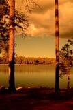 Golden light forest lake Stock Photo