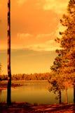Golden light forest lake Stock Photography
