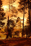 Golden light forest lake Stock Photo