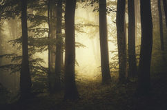 Golden light forest Stock Photo