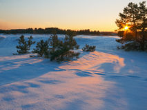 Golden light in frosty evening Royalty Free Stock Photography