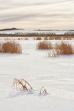 Golden Light on a Frozen Lake. Landscape of a snow covered, frozen lake with grass peaking out Stock Photo