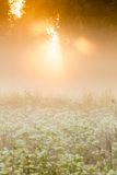 Golden light shine to foggy meadow Royalty Free Stock Images
