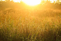 Golden light shining down on the grass./Golden light Stock Photos