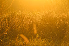 Golden light shining down on the grass./Golden light Stock Photos