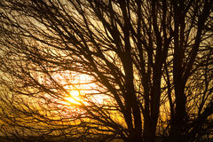 Golden Light Shining Through Royalty Free Stock Images