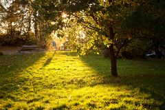 Golden light shining to grass and tree silhouette Stock Photography