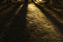 Golden light in a spring forest. Golden light of setting sun and the shadows of tree trunks on the ground in the spring forest Royalty Free Stock Photo