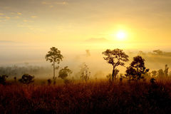 The golden light of sunrise. Royalty Free Stock Image