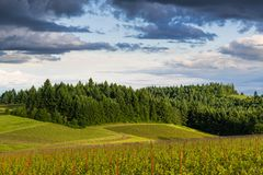 The golden light of sunset illuminates a landscape of vineyards contrasted with lush, green forest stock photo