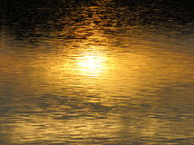 Golden light in water and glare in the marsh. The sun shines in the water and the glare in the marsh Stock Photo