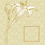 Golden Lily on the background of the ornament. Floral background Royalty Free Stock Images