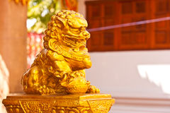 Golden lion Royalty Free Stock Photos