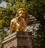 golden lion Royalty Free Stock Photography