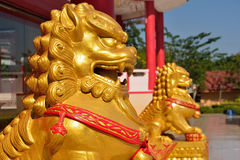 Golden lion statue Stock Photos
