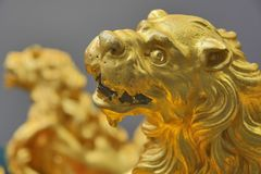 Golden lions Stock Photo