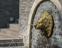 Golden Lions blow Stock Photography