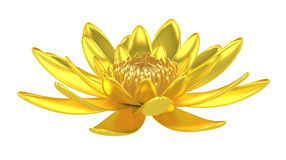 Golden lotus flower water lily Stock Images