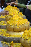 Golden Lotus flowers Stock Photography