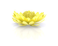 Golden lotus perfect clear water lily Royalty Free Stock Photos