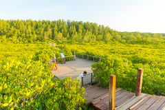 Golden mangrove field or Tung Prong Thong Stock Images