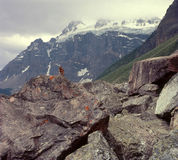 Golden-mantled ground squirrel and Bident Mountain, Consolation Lakes Trail, Banff National Park, Alberta Stock Image