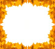 Golden maple foliage frame Royalty Free Stock Image