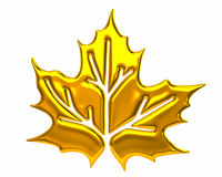 Golden maple leaf Royalty Free Stock Image