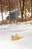 Golden Maple Leaf-Snow-Falls River. Gold maple leaf partially buried in fresh snowfall.  In background, blue river waters stream through the winter woods Royalty Free Stock Images