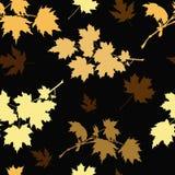 Golden maple Stock Photos