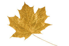 Golden maple tree leaf. Isolated on white (with clipping path Royalty Free Stock Images