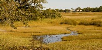Golden Marsh Stock Images