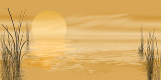 Golden marsh sunrise Stock Photos