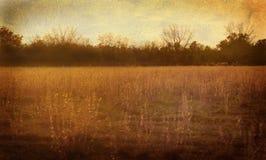 Golden Meadow Stock Image