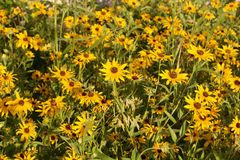 Golden Meadow Royalty Free Stock Photography