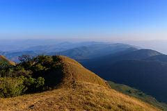 Golden Meadow in the mountain. Golden Meadow in the mountain at Chiang mai, Thailand Stock Images