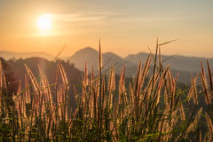 Golden meadow and mountain at sunset Stock Photo