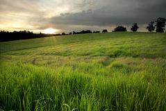 Golden Meadow at Sunset Stock Photos