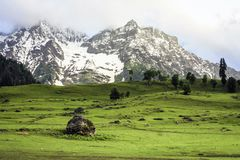 Golden meadows of Sonamarg. Beautiful far stretching meadows of Sonamarg with towering snow-capped peaks in the background. Jammu and Kashmir, India Stock Image